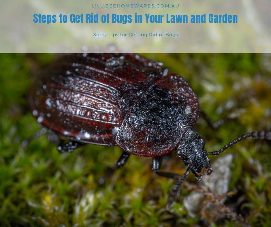 Steps to Get Rid of Bugs in Your Lawn and Garden